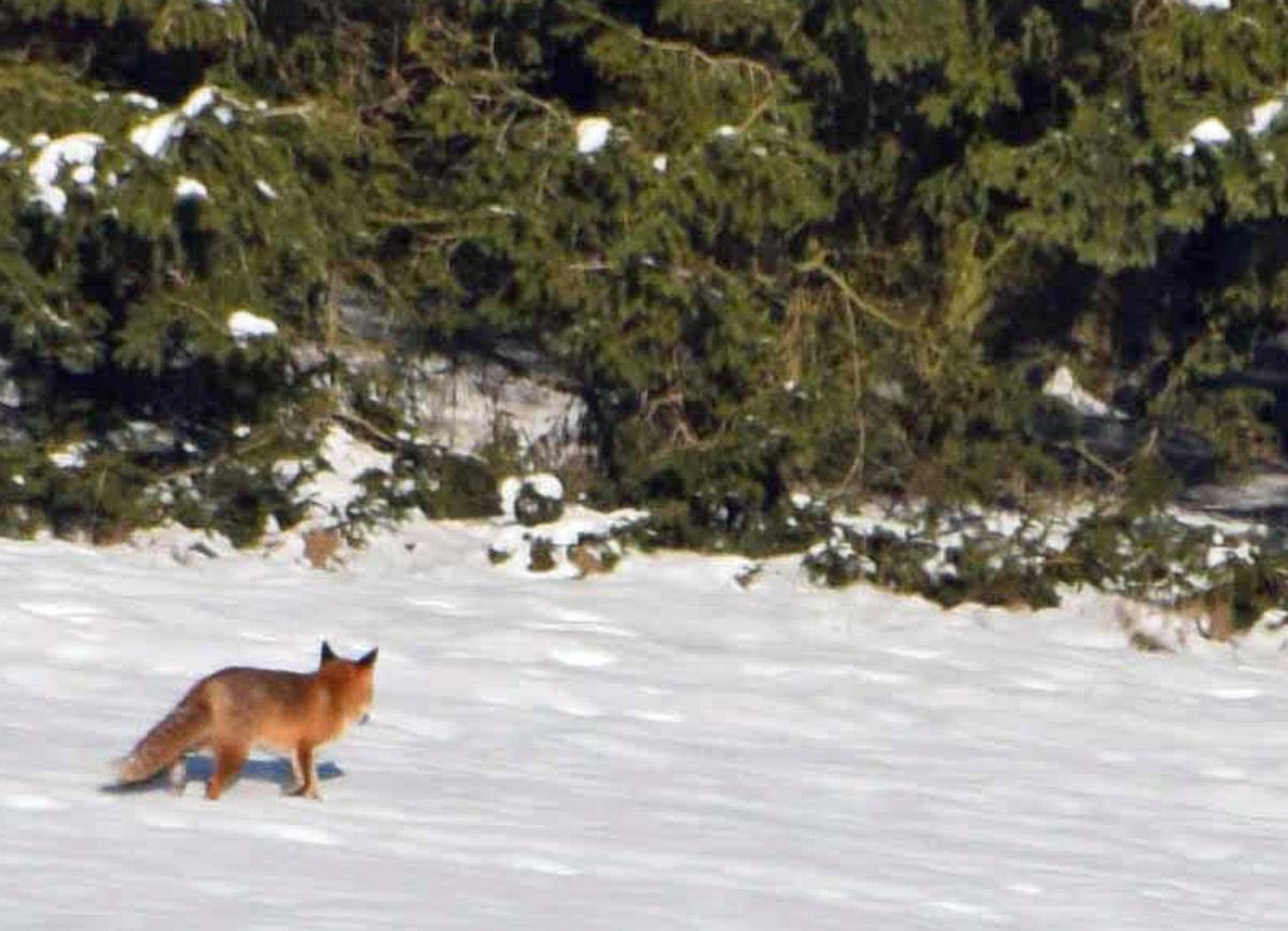 Naturpark Im Winterurlaub Erleben