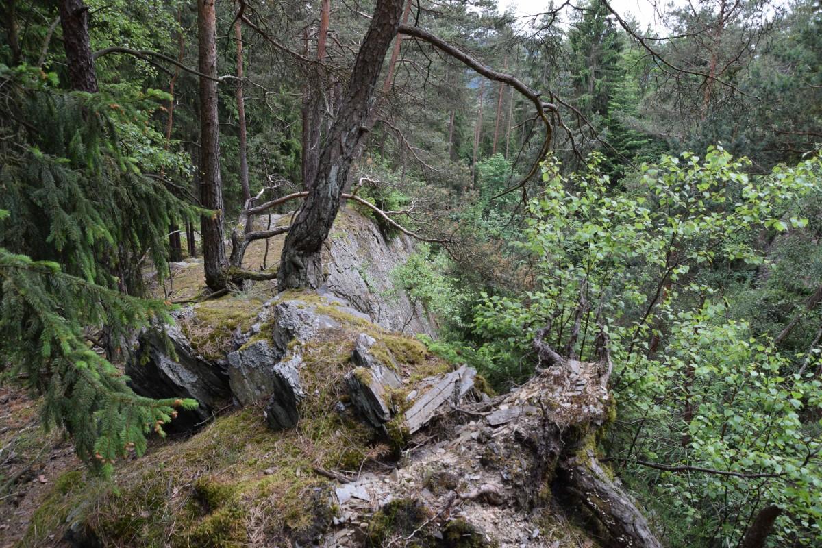 Wildnis Im Naturpark